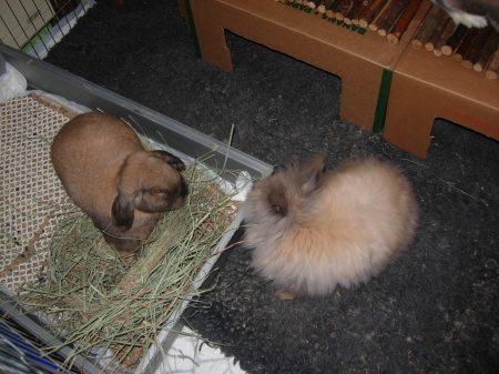 Education du lapin la propret comportement du lapin - Comment empecher un chat de gratter a la porte ...