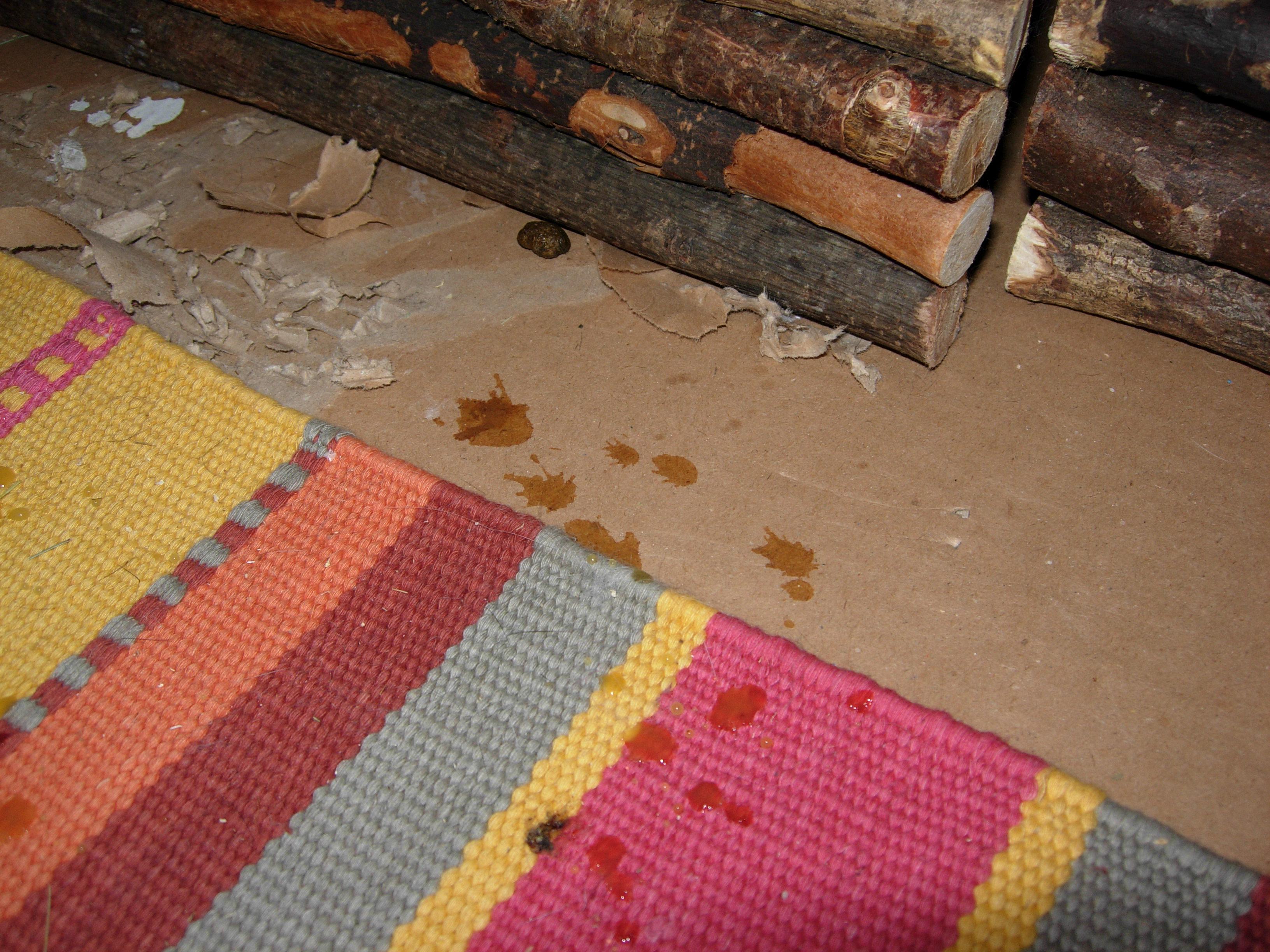 education du lapin la propret comportement du lapin de compagnie. Black Bedroom Furniture Sets. Home Design Ideas