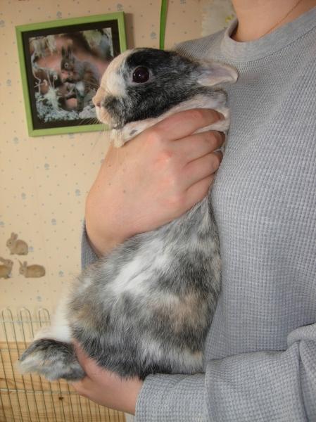 Pourquoi mon lapin n aime t il pas que je le prenne dans mes bras comportement du lapin de - Film ou il se coupe le bras ...
