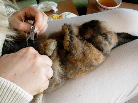 Mettre son lapin en transe comportement du lapin de for Avoir un lapin a la maison