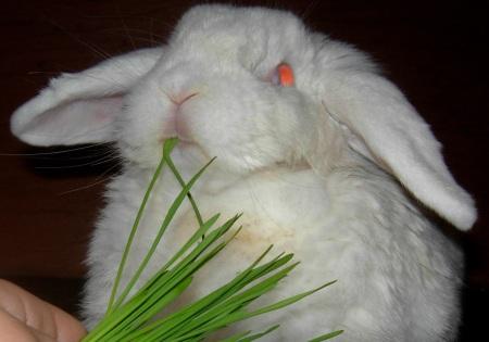 faire germer et pousser des graines pour ses lapins comportement du lapin de compagnie. Black Bedroom Furniture Sets. Home Design Ideas