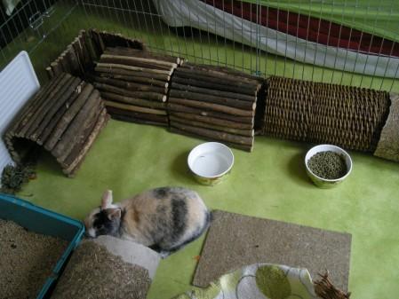 des tunnels pour jouer se d fouler se cacher et se reposer comportement du lapin de compagnie. Black Bedroom Furniture Sets. Home Design Ideas