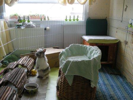 amenagement lapin appartement