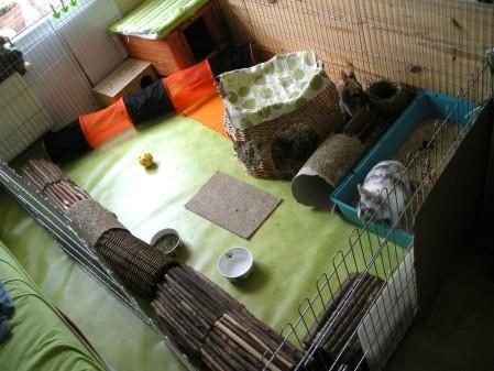 Habitat du lapin de compagnie comportement du lapin de compagnie - Jeux pour lapin a fabriquer ...